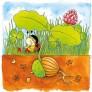 Večplastna sestavljanka - Kako zraste hrast?